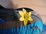 Украшение-цветок Deuter